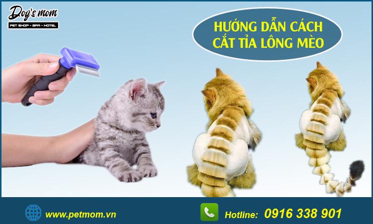 Cắt tỉa lông cho mèo
